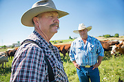 Bill Gales and Ed Wilsey of Homstead Natural Foods check out the cattle on Bill's ranch in Middleton, Idaho. They offer grass-fed beef to the region.