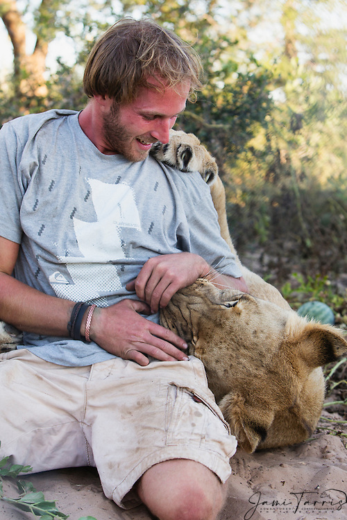 Valentin Gruener with a lioness (Panthera leo) that he raised from a small dying cub to a healthy adult; they developed a close and intense relationship, Grasslands Private Reserve, Kalahari, Botswana, Africa