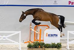 064, Salvino Van't Merelnest<br /> KWPN Hengstenkeuring 2021<br /> © Hippo Foto - Dirk Caremans<br />  02/02/2021