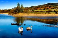 Photographer: Chris Hill, Lough Meela, County Rosscommon