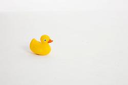 Studio portrait of plastic duck.