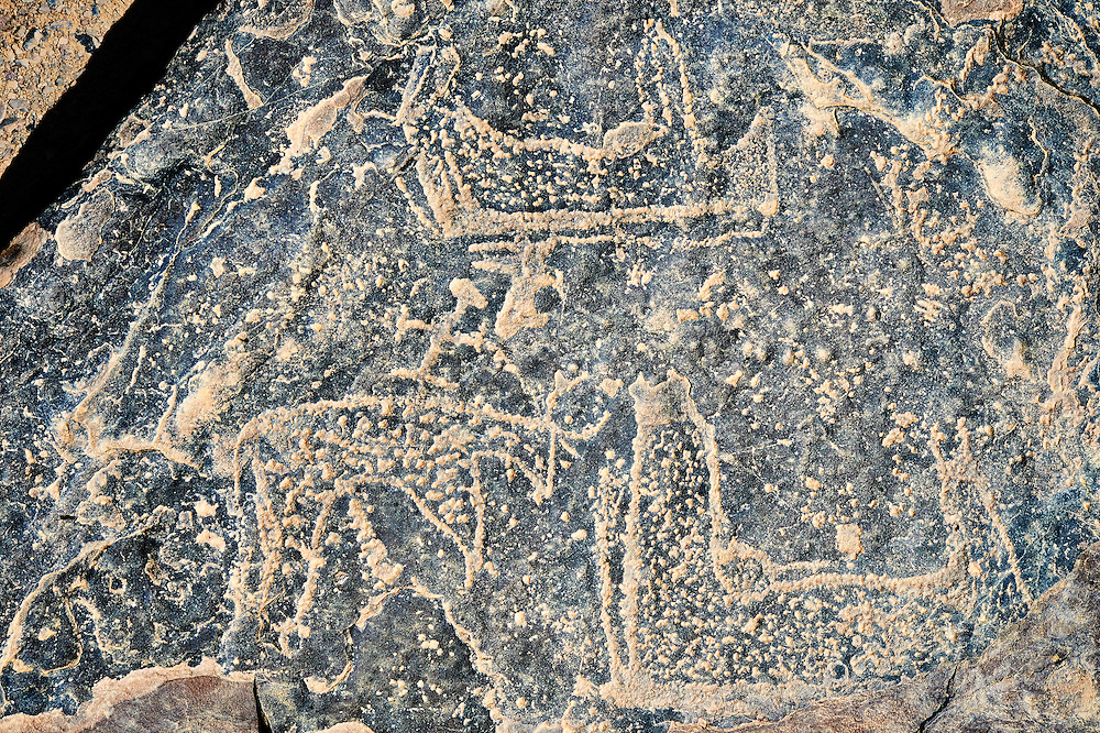 Prehistoric Saharan petroglyph rock art carvings of cattle with small figures riding on their backs from a site 20km east of Taouz, South Eastern Morocco .<br /> <br /> Visit our MOROCCO HISTORIC PLAXES PHOTO COLLECTIONS for more   photos  to download or buy as prints https://funkystock.photoshelter.com/gallery-collection/Morocco-Pictures-Photos-and-Images/C0000ds6t1_cvhPo<br /> <br /> Visit our PREHISTORIC PLACES PHOTO COLLECTIONS for more  photos to download or buy as prints https://funkystock.photoshelter.com/gallery-collection/Prehistoric-Neolithic-Sites-Art-Artefacts-Pictures-Photos/C0000tfxw63zrUT4
