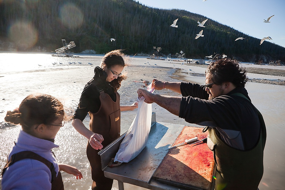 Carlos Rivera, from Wasilla, helped by his daughters (front to back) Juliane and Kristian, filets and bags sockeye salmon caught in the family's fish wheel on the Copper River, near Chitina, Alaska.
