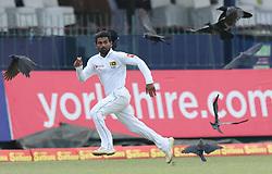 November 23, 2018 - Colombo, Sri Lanka - Sri Lankan cricketer Kaushal Silva runs to catch the ball during the 1st day's play in the 3rd and final test cricket match between England and Sri Lanka at SSC international cricket stadium, Colombo, Sri Lanka. 11-23-2018  (Credit Image: © Tharaka Basnayaka/NurPhoto via ZUMA Press)