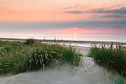 Marram grass at sunset, Holme dunes & beach. North Norfolk, East Anglia.