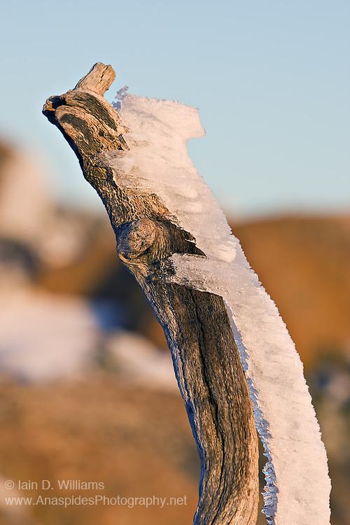 Windblown Ice, Mount Wellington - Tasmania