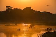 Sunrise on Cuiaba River<br /> Northern Pantanal<br /> Mato Grosso<br /> Brazil
