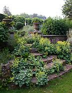 Alchemilla mollis growing on stone steps at Cothay Manor, Greenham, Wellington, Somerset, UK