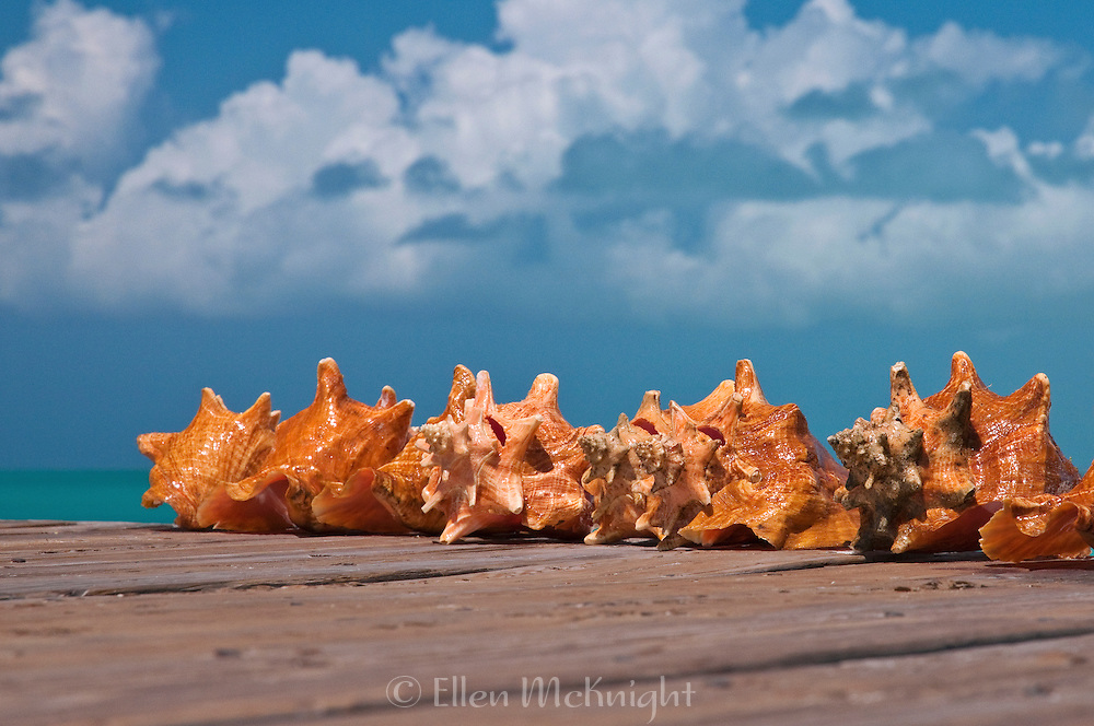 Freshly caught conch on a pier at Grace Bay in Providenciales, Turks & Caicos