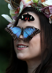 Model Jessie May Smart with a Blue Morpho and a Transandean Cattleheart butterfly during a photocall for RHS Garden Wisley's Butterflies in the Glasshouse exhibition in Woking, Surrey.
