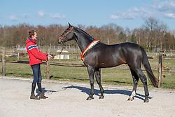 Pegase van't Ruytershof<br /> Stal De Winter - Sint Kathelijne Waver 2018<br /> © Hippo Foto - Dirk Caremans<br /> 20/03/2018