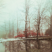 Reflection of trees on  a pond in winter