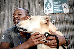 """Police Operations and Essential Services Personnel operating under lockdown period in Fish Hoek and Masipumelela in the Cape Peninsula, near Cape Town, Western Cape, South Africa, RSA <br /> <br /> Banele Nondlala, who works at the animal rescue society TEARS is one of the lucky ones. Out of all the people in Masipumelela I interview, he is the only one with a job. He is one of the animal handlers: even though most of the dogs have been 'adopted' for lockdown, he still comes in to help the vets with emergency cases. """"It is difficult to keep our distance with six people in the house"""", he explains softly."""