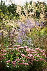 Border at Fields Farm with Stipa gigantea, Perovskia atriplicifolia 'Blue Spire', fennel, sedum and foxglove seedheads