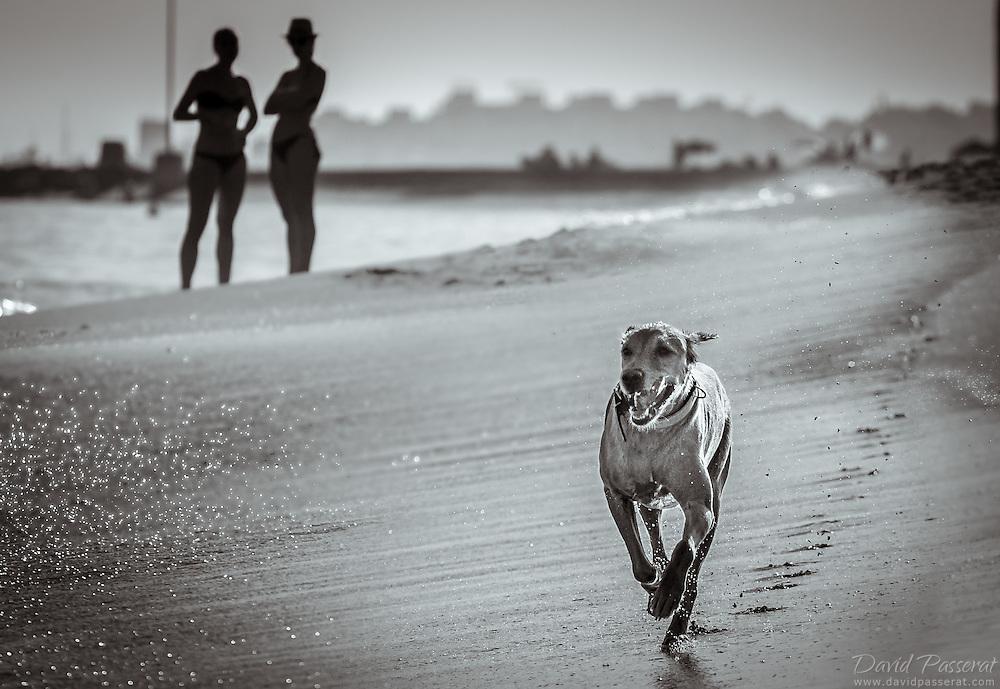 Running dog on the beach.