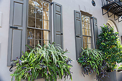 December 21, 2017 - Charleston, South Carolina, United States of America - Winter window boxes blooming on a historic home on Meeting Street in Charleston, SC. (Credit Image: © Richard Ellis via ZUMA Wire)