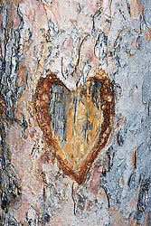 Aug. 23, 2012 - Heart carved in a tree trunk (Credit Image: © Image Source/ZUMAPRESS.com)