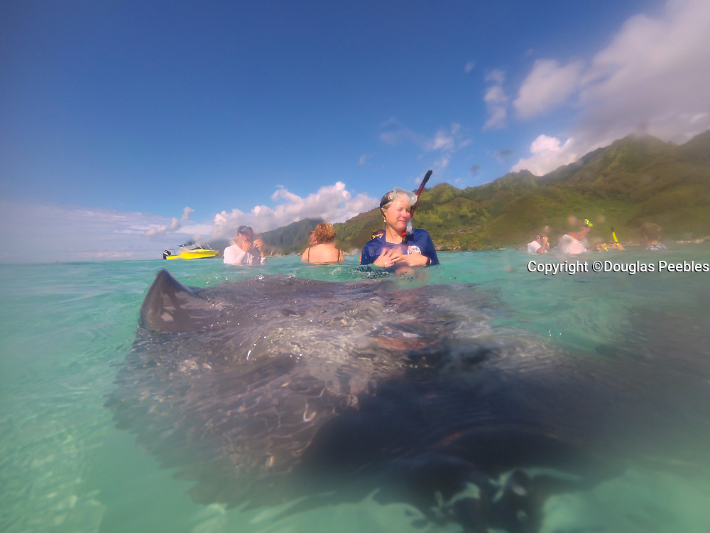 Tiahura, Moorea, Swimming with sharks  and sting Rays, French Polynesia, South Pacific