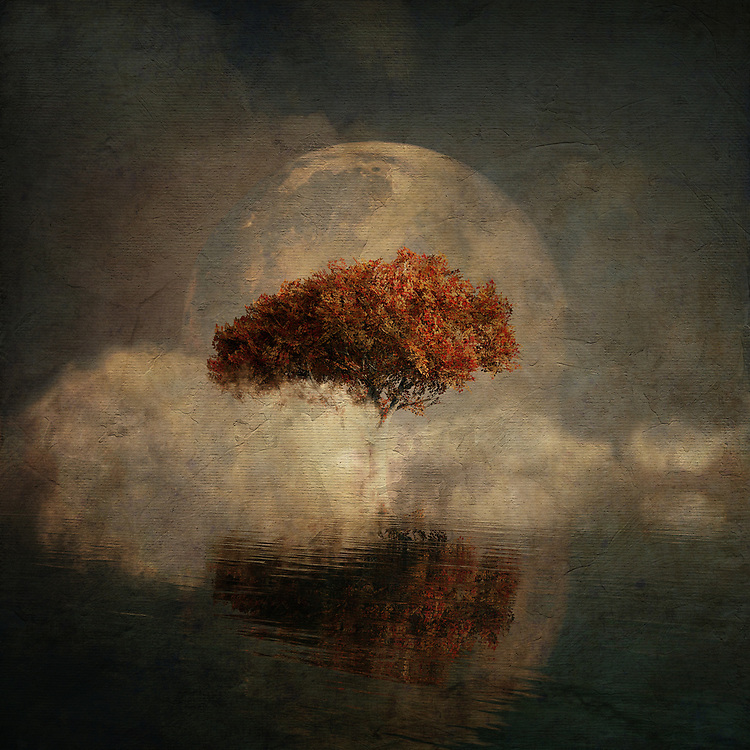 American Beech<br /> There is something truly unique to this fine art piece from Jan Keteleer. We see a strange blend of images, including a moon. We see a haze of the autumn season covering everything. There is something about this piece that evokes the places we visit in our dreams. There is no question that this piece can also connect us to images and memories that dominated our childhoods. You will love the fact that this piece can work in just about any space you can imagine. It is ideal for anyone who prides themselves on having truly unique taste, when it comes to singular examples of art.<br /> <br /> BUY THIS PRINT AT<br /> <br /> FINE ART AMERICA<br /> ENGLISH<br /> https://janke.pixels.com/featured/dream-landscape-with-full-moon-jan-keteleer.html<br /> <br /> <br /> WADM / OH MY PRINTS<br /> DUTCH / FRENCH / GERMAN<br /> https://www.werkaandemuur.nl/nl/shopwerk/Droomlandschap---Landschap-vanuit-je-dromen-met-een-volle-maan-en-de-zeee/434793/134