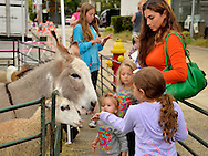 Merrick, New York, USA. 13th September 2014. Young girls and parent feed sheep and a donkey at the Petting Zoo at the 23rd Annual Merrick Fall Festival & Street Fair in suburban Long Island.