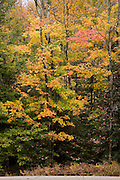 Fall colors in trees by road and trailhead.