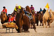 A competition at a local camel fair in the remote Gobi Desert, Gobi Desert, Mongolia