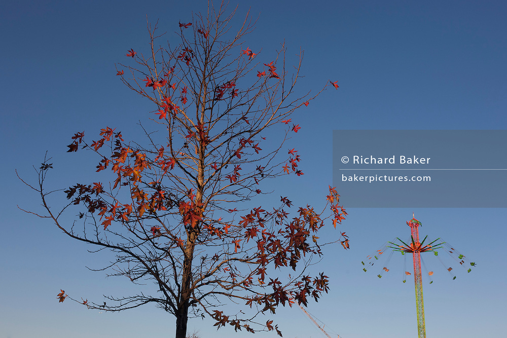 Autumn leaves on a park tree and in the distance, the rising circular fairground ride on the Southbank, on 29th November 2016, in London England.