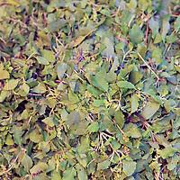 Asia, India, Calcutta. Green leaves at the flower market in Calcutta.