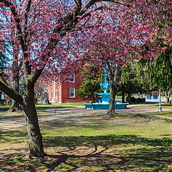 Chestertown, MD, USA - March 30, 2013:Spring Blossums in a park inChestertown, MD