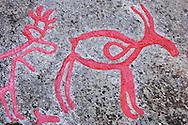 Rock carvings of reindeer; Rangifer tarandus; Glösa, Jämtland, Sweden