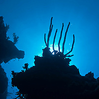 Wall Dive, Grand Cayman