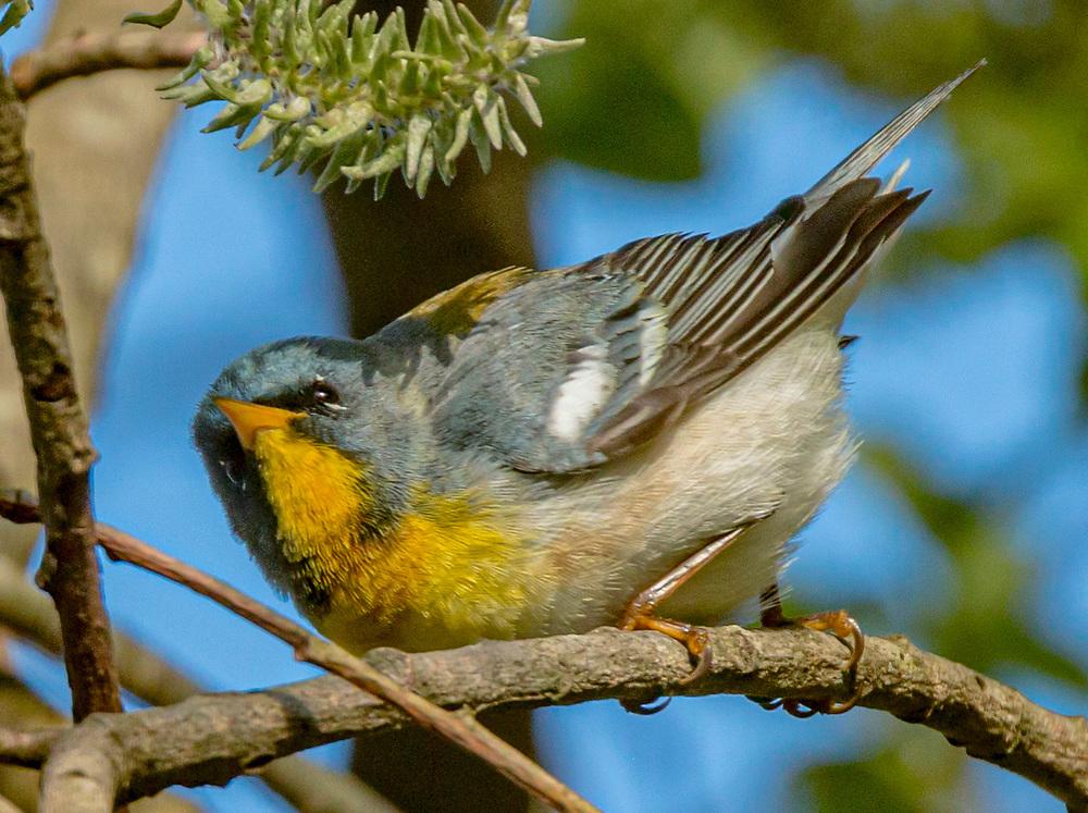 Gold Finch<br /> 57 High <br /> Jamestown, RI 02835