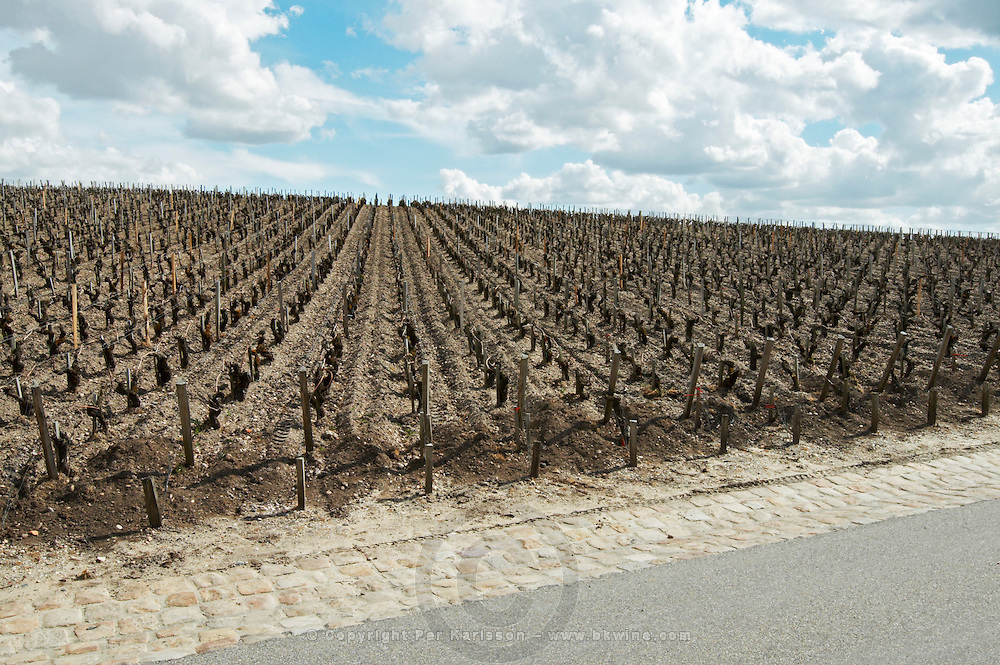 vineyard without grass in spring ch lafite rothschild pauillac medoc bordeaux france