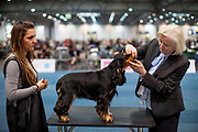 A dog owner is patiently waiting for her dog being evaluated by a judge during the ring competition at the Leipzig Trade Fair. Over 31,000 dogs from 73 nations will come together from 8-12 November 2017 in Leipzig for the biggest dog show in the world.