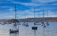 A view sail boats in the Sydney Harbor.