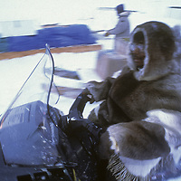 BAFFIN ISLAND, Nunavut, Canada.  Apitak Iqaqrialu, an Inuit clan elder of Clyde River, drives his snowmobile, wearing traditional caribou parka.