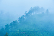 Munnar, Western Ghats Mountains, Kerala, India