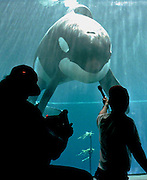 A video crew member asks Keiko a question in the Newport, Oregon aquarium before the orca before boarding a cargo plane for Iceland.   Keiko responded only with a stare. (The Seattle Times, 1998)