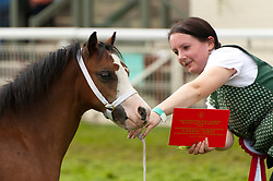 © Licensed to London News Pictures. 24/07/2018. Llanelwedd, Powys, UK. Winner of the 'Filly Foal' Class Section A poses for photos in the Main Ring on the second day of the Royal Welsh Agricultural Show. The Royal Welsh Agricultural Show is hailed as the largest & most prestigious event of its kind in Europe. In excess of 200,000 visitors are expected this week over the four day show period. The first ever show was at Aberystwyth in 1904 and attracted 442 livestock entries. Photo credit: Graham M. Lawrence/LNP