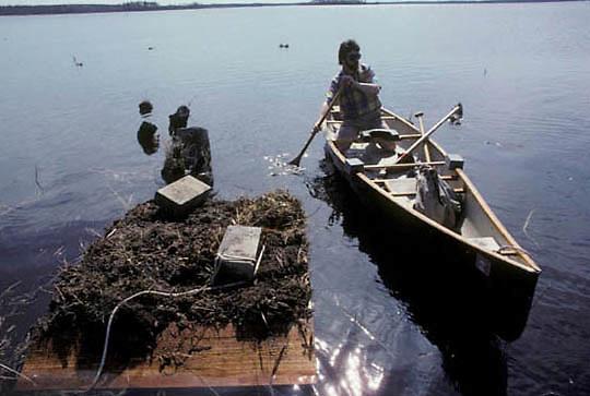 Volunteer Denny Olsen building loon nesting platform to help preserve loons in Northern Minnesota.