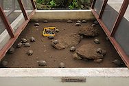 Charles Darwin research station, captive tortoises, Galapagos, Ecuador.