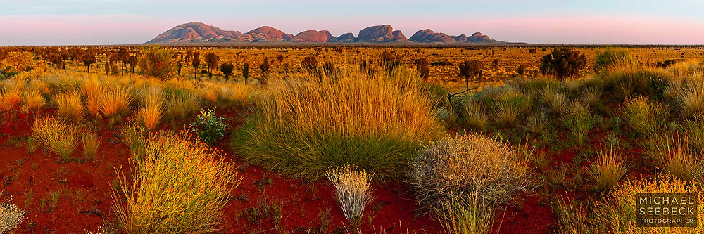 Wildflowers amongst spinifex with early morning sunlight on the monoliths of Kata Tjuta<br /> <br /> Code: HATS0009