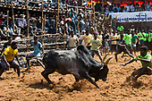 Raging bulls - The world's oldest most dangerous sport