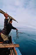 Chukchi whale hunter, hunting Grey whale, Chukotka, Siberia, Russia