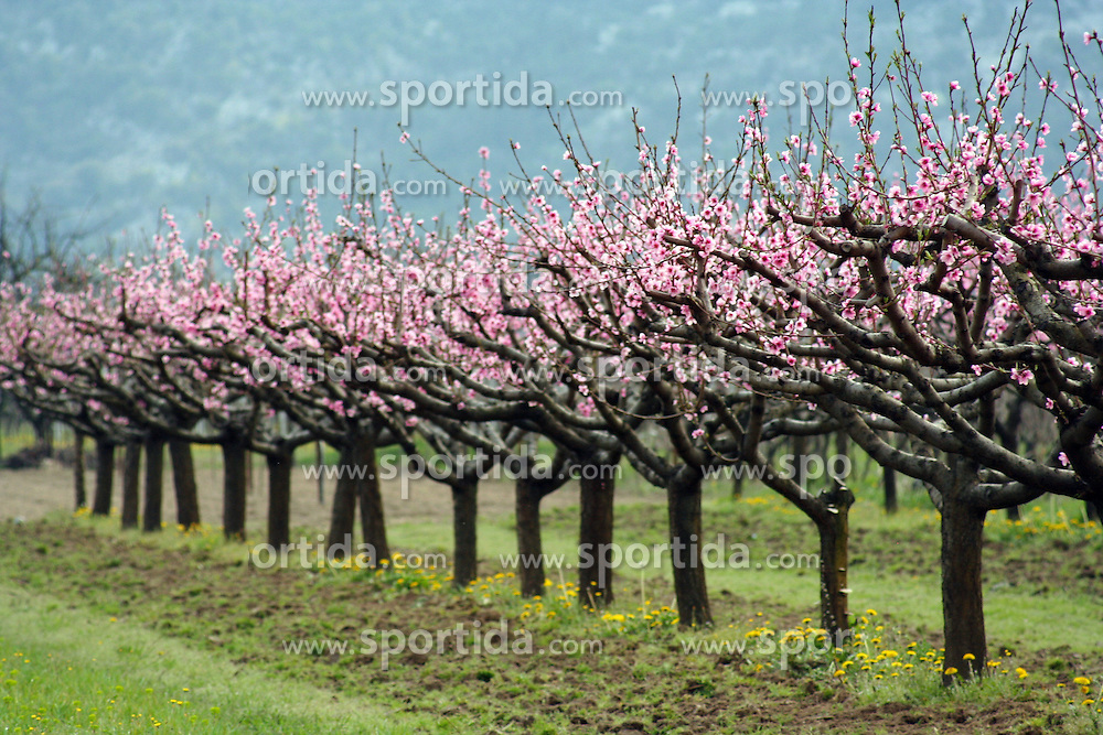 07.03.2016, Vrgorac, CRO, Frühlingsboten, im Bild Obstbäume beginnnen zu blühen // fruit trees in bloom at Vrgorac, Croatia on 2016/03/07. EXPA Pictures © 2016, PhotoCredit: EXPA/ Pixsell/ Jure Divic/HaloPix<br /> <br /> *****ATTENTION - for AUT, SLO, SUI, SWE, ITA, FRA only*****