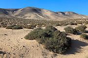 Dry sandy desert Jandia peninsula, Fuerteventura, Canary Islands, Spain