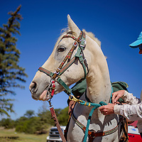 Donna Venable gets the bridle and reins on her horse for a ride with the Zuni Mountain Chapter of the Backcountry Horsemen of New Mexico Saturday near Continental Divide.