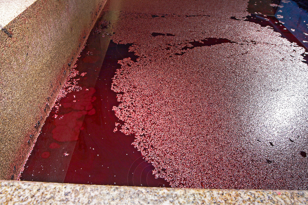 lagares with fermenting must, pips floating quinta do seixo sandeman douro portugal