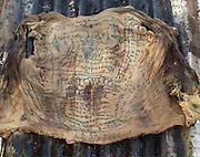 Bizarre black magic tattoo spell preserves skin on corpse<br /> <br /> These bizarre pictures show skin from an ancient burial site that was kept in tact - thanks to a weird black magic tattoo SPELL.<br /> <br /> Authorities unearthed the corpse when they were cleaning a remote cemetery in Mukdahan on the border of Thailand and Laos. <br /> <br /> They were amazed that the skin was still in tact - hanging loose around the dead man's skeleton. <br /> <br /> Incredibly, dozens of tribal bamboo inkings done while the person was still alive show a black magic spell for nothing to ever penetrate the skin.<br /> <br /> Excavators believe the Sanskrit writing and pictures of the tiger ensured the man's body stayed together and was prevented from rotting. <br /> <br /> But in a cruel twist, it may have been the supernatural spell that killed him - it made the skin so strong he couldn't have an operation for fatal appendicitis, according to rescue organisation Goopaitongdaeng Jeemokkho Goopainueng Soonpaed (CORR).<br /> <br /> The government organisation shared the pictures online. <br /> <br /> They said: ''The authority cleaned the cemetery with local people and volunteers and they found the skin of an old man who died of appendicitis. <br /> <br /> ''However, he couldn't have surgery because the skin was too hard to cut and he ended up dying in agonising pain from the illness. <br /> <br /> ''The skin has a lot of tattoos and it hasn't gone rotten. The spell to protect him and make him strong prevented the operation and then after he died stopped his skin from rotting.''<br /> <br />  Deeply superstitious Thais - the majority of whom believe in ghosts and reincarnation - were amazed when the images emerged. <br /> <br /> Suriya Rachatawet said: ''This is amazing. It shows that magic spells really do work.''<br /> ©Exclusivepix Media