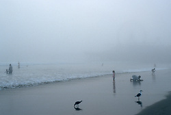 A foggy day at the beach